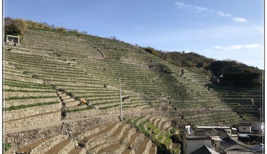 1000本の竹灯籠が段畑を照らす/遊子 段畑夕涼み会