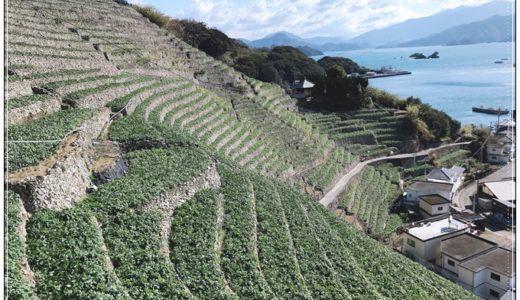 宇和島の遊子水荷浦段畑の景色が絶景!訪れるなら今が最高!!