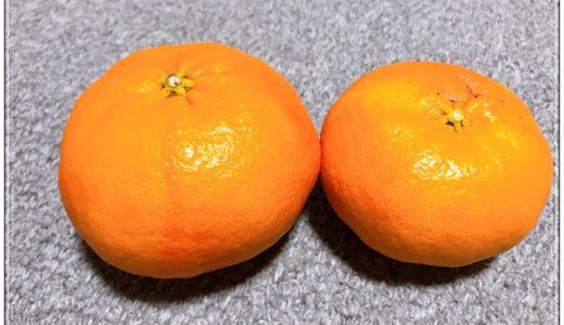 マツコの知らない世界でも紹介された 噂の美味しい「甘平」をGET!