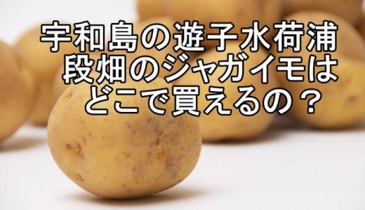 宇和島の遊子水荷浦段畑のジャガイモはどこで買えるの?
