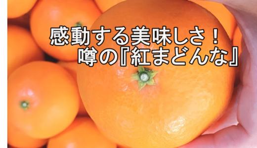 愛媛おすすめの1品/感動する美味しさ!噂の『紅まどんな』を購入!!