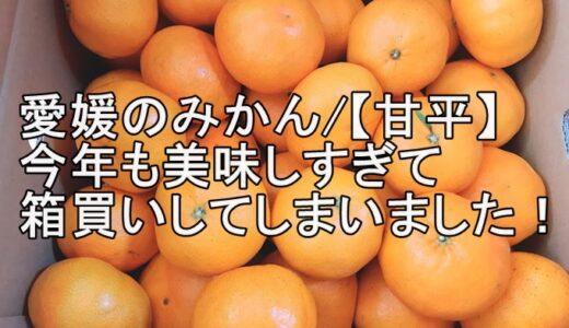 愛媛のみかん/【甘平】今年も美味しすぎて箱買いしてしまいました!